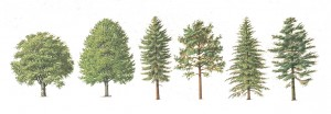 Tree Graphics