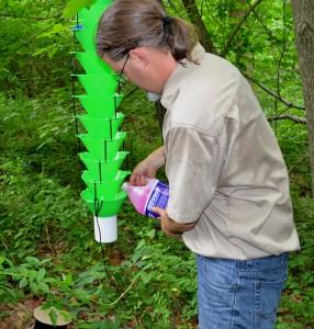 New Lindgren funnel trap