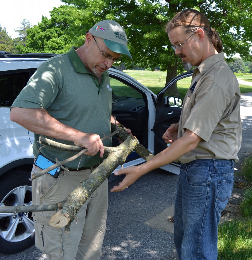 Pete Kingshill of Bartlett Tree Co. meets with DDA State Survey Coordinator Jimmy Kroon at Gracelawn Memorial Park south of Wilmington to examine an ash tree branch for signs of EAB. It was determined that a native bark beetle was the likely culprit.