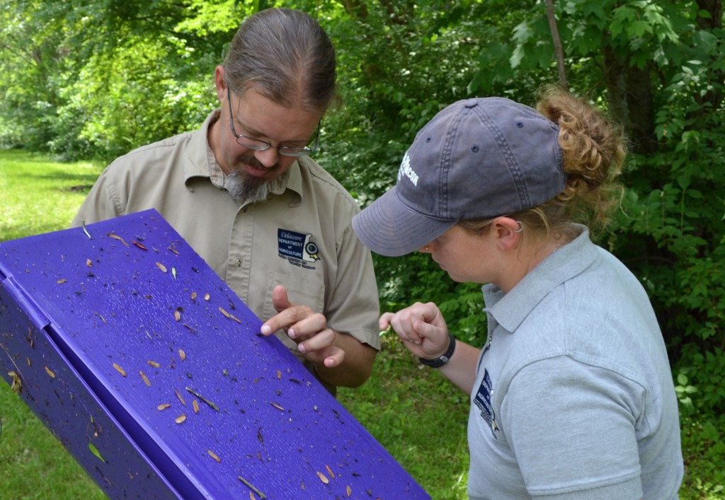 DDA staffers Jimmy Kron and Jillian Dixon inspect a purple trap in New Castle County's Sharpley Park. No EAB has been detected to date.