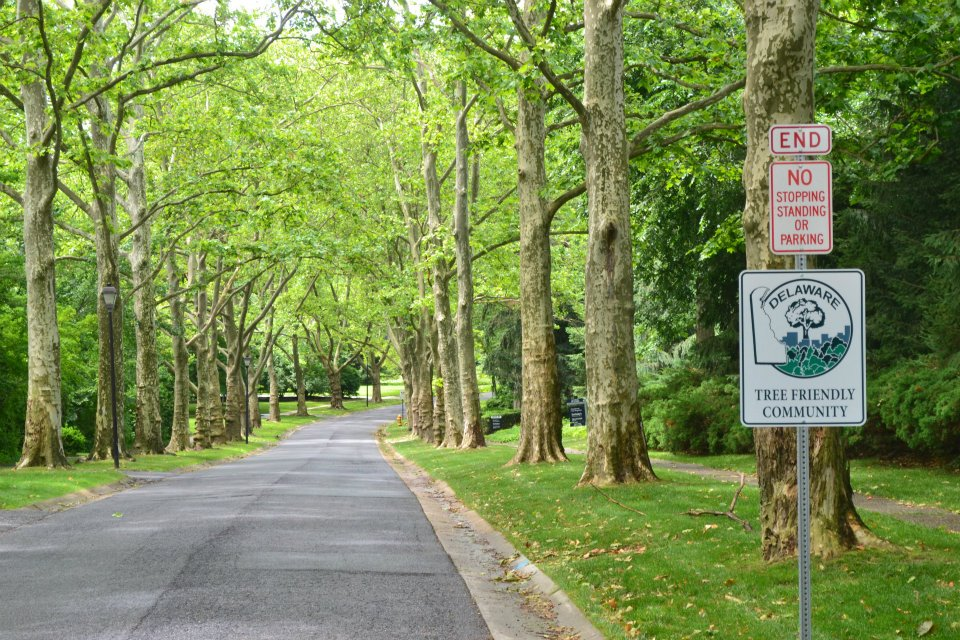 Tree Friendly Westover Hills