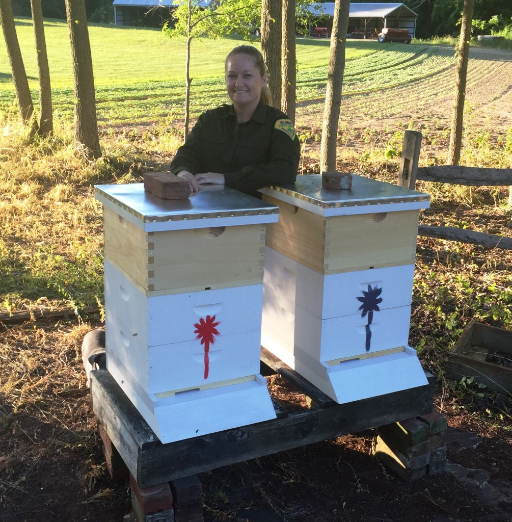 Delaware Forest Service trainer-educator examines the two new bee hives at the Blackbird Forest Education Center.