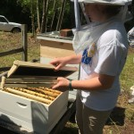 """Rachel MAckey, a 4-H volunteer from Kent County with an interest in beekeeping, helped set up the new hives at the Blackbird State Foirest Education Center. Five frames from an existing colony are put into the new hive, along with five empty frames that will give the colony room to expand their """"brood"""" and make honey."""