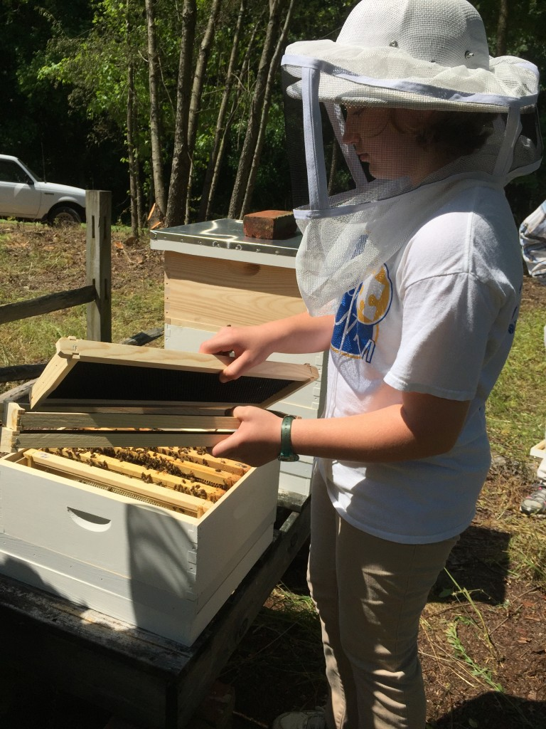 "Rachel MAckey, a 4-H volunteer from Kent County with an interest in beekeeping, helped set up the new hives at the Blackbird State Foirest Education Center. Five frames from an existing colony are put into the new hive, along with five empty frames that will give the colony room to expand their ""brood"" and make honey."