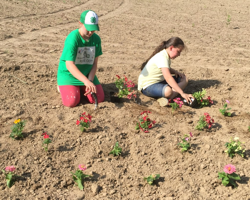 From left, XXXXX and Haley Halderman, 4-H volunteers from Kent County, helped plant flowering annuals near the new bee hives to help the newly-established colonies forage for pollen and nectar.