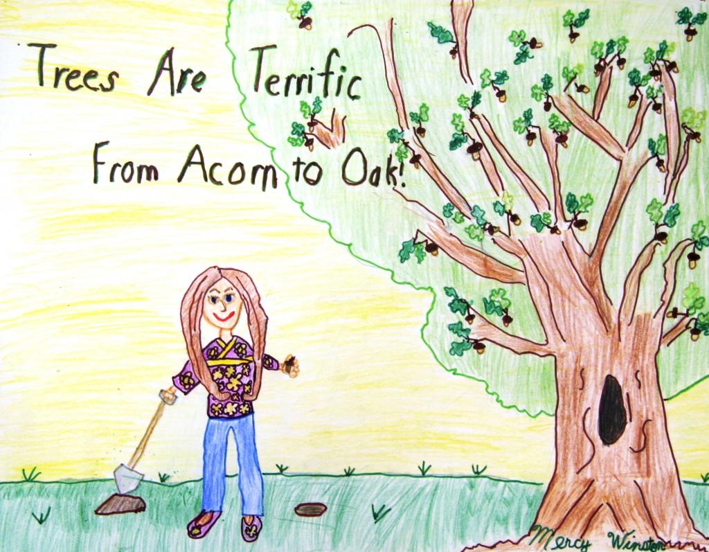Acorn to Oak2