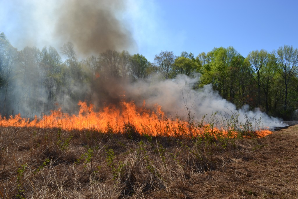 Prescribed Burn_April 29 2015 (61)