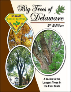 Big Trees – Delaware Trees on